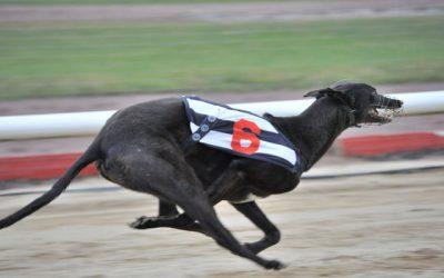 Greyhound_Swift_Euro-_3big