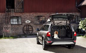 volvo-dog-collection-released-7429_1