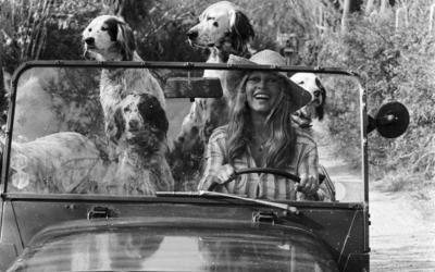 Roedel honden op pad met dame